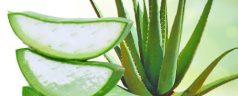 Aloe vera v Hisi zdravja